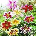 100pcs Lily Seeds Hemerocallis Desperado Seeds Hemerocallis Fulva Day-lily Flower Seeds Ground Cover Plant Seeds