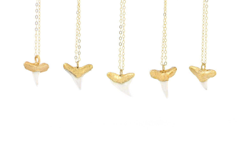 b88b4606c35a3 Amazon.com: Gold Dipped Shark Tooth Necklace, Shark Tooth Necklace ...