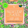 Palm Fridays Ecoware Square Disposable Plates - Compostable - 100% Natural - Chemical Free - USDA Certified