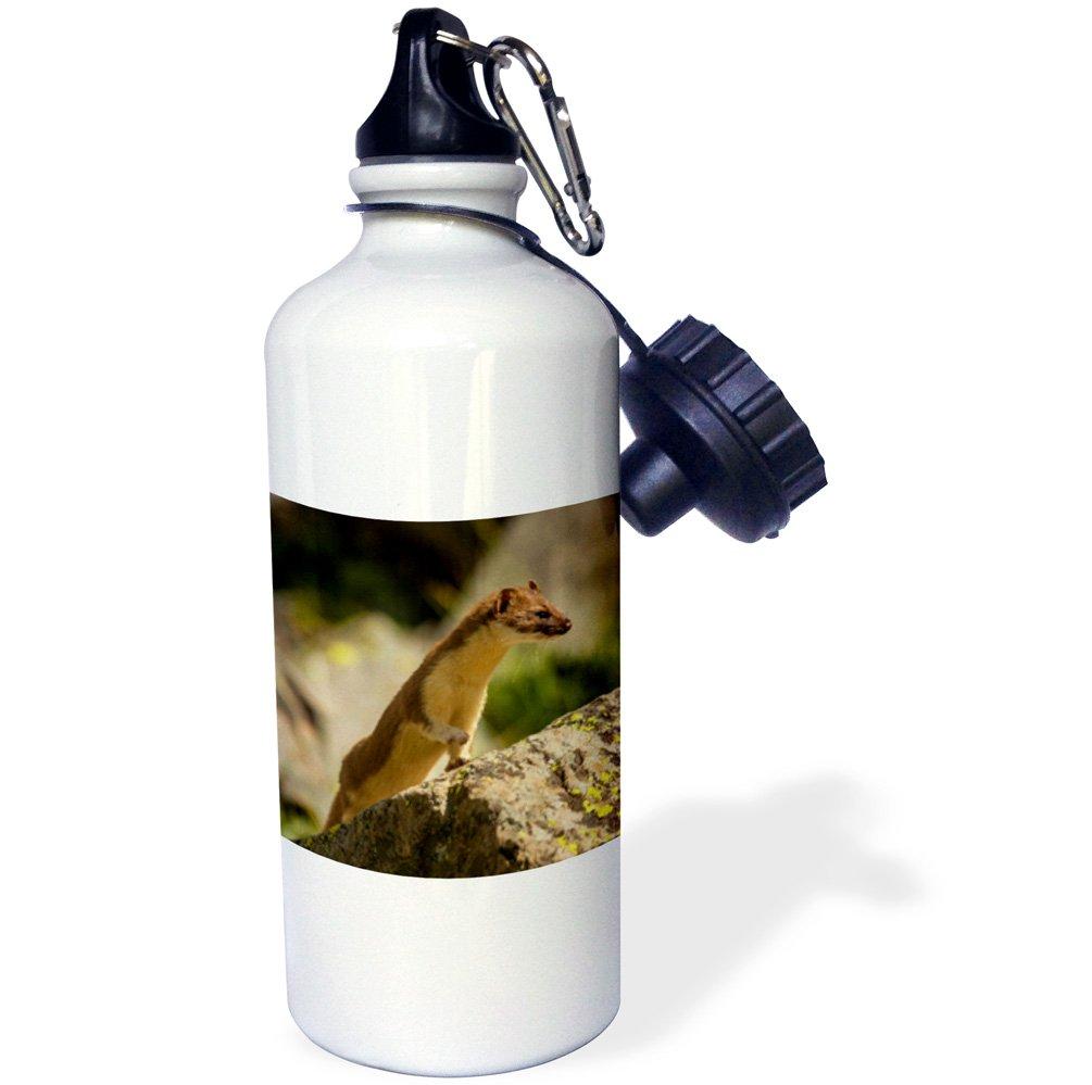 Colorado 3dRose USA 21 oz Multicolor wb/_191034/_1 Short-Tailed Weasel in Summer Fur San Juan Mountains -Sports Water Bottle 21oz