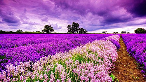- PROW Wooden Jigsaw Puzzle,1000 Piece Puzzle, Finish Size 30''x20'' - Basswood Premium Quality, Romantic Purple Field of Lavender Flowers Sunset