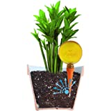 Plantpal Pack of 2 Large Watering Globes. New Clear Colours ORANGE clear view of water level. Holiday and Everyday Self Watering for plants.