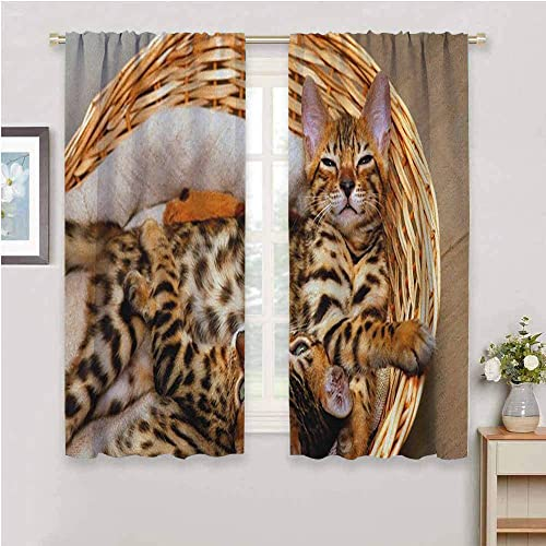 Kitten Black Out Curtain Panel