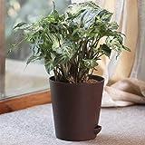 Ugaoo Syngonium Podophyllum with Self Watering Pot