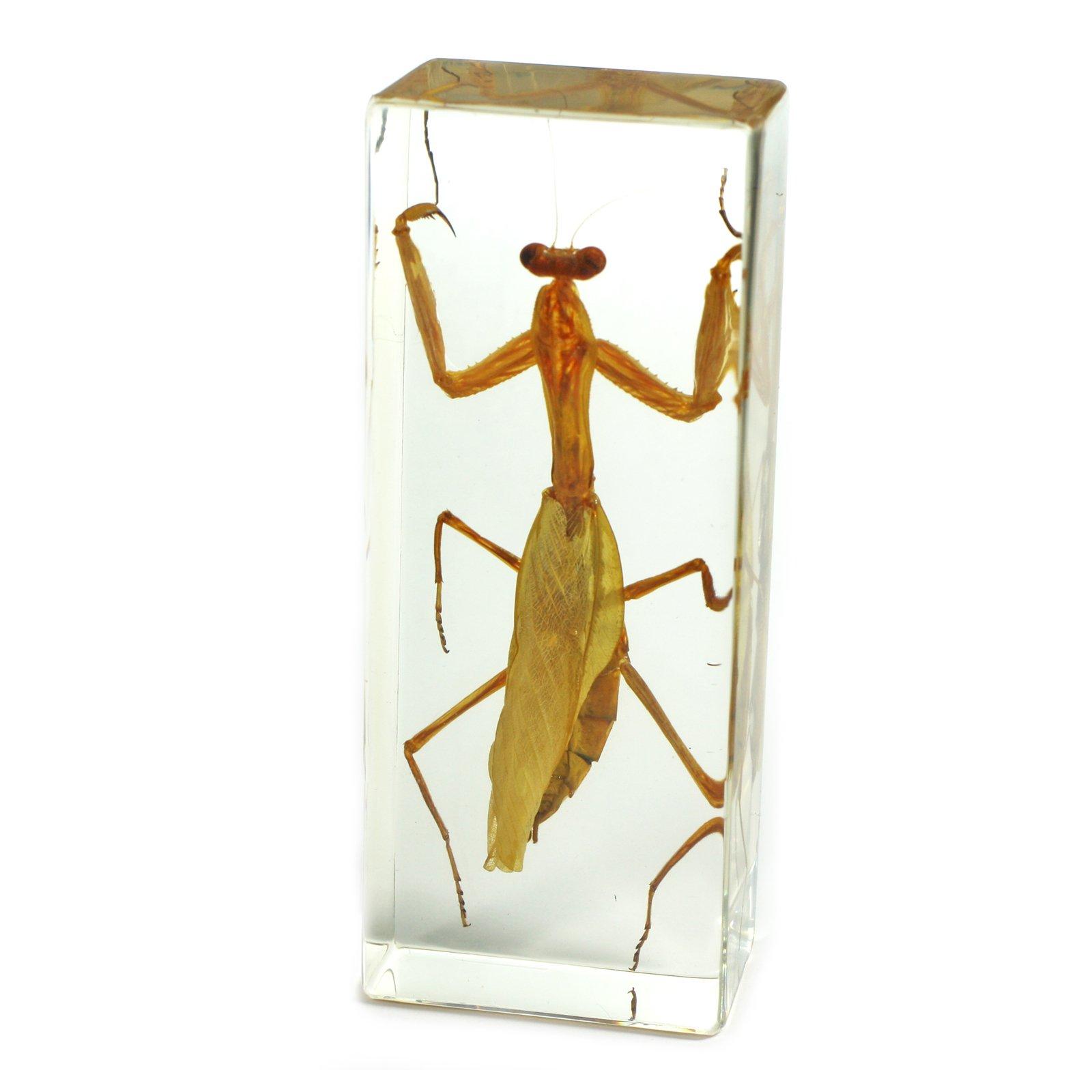 """REALBUG Praying Mantis Paperweight (1 5/8 x 4 3/8 x 1 1/8"""")"""