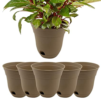 Amazon Com Suncast 6 Pack Self Watering Succulent 7 Planter For