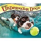 Underwater Dogs 2018 Daily Desk Boxed Calendar