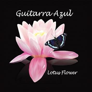 Guitarra azul lotus flower amazon music mightylinksfo