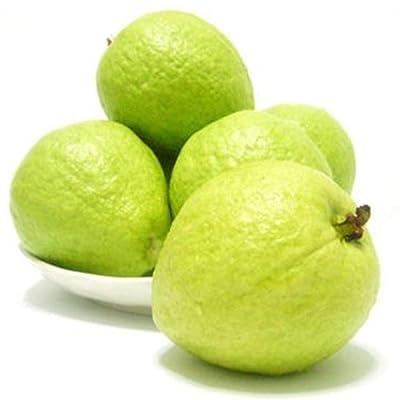 Mggsndi 1000Pcs Psidium Guajava Guava Seeds Fruit Plant Seed Non-GMO Easy Grow for Garden Farm Bonsai Guava Seeds : Garden & Outdoor