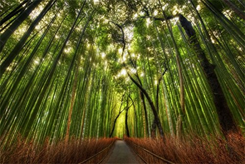 OFILA 9x6ft Vinyl Photography Backdrop Dreamy Bamboo Forests Path Sunshine Photographic Background Video Studio Props Children Baby