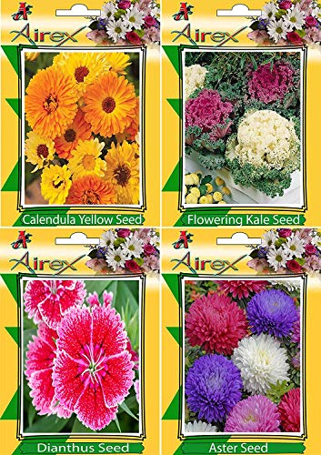 - Zoomy far: Calendula Yellow, Flowering Kale, Dianthus and Aster Flower Seeds (Pack of 25 Seeds Per Packet)