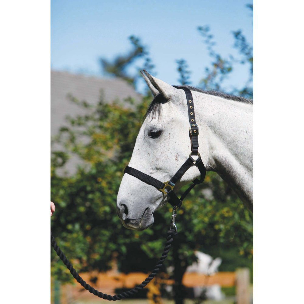 Shires Wessex Headcollar and Lead Rope Set