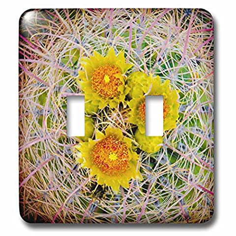 3dRose Danita Delimont - Cactus - Barrel Cactus in bloom, Anza-Borrego Desert State Park, Usa - Light Switch Covers - double toggle switch - Cactus Outlet