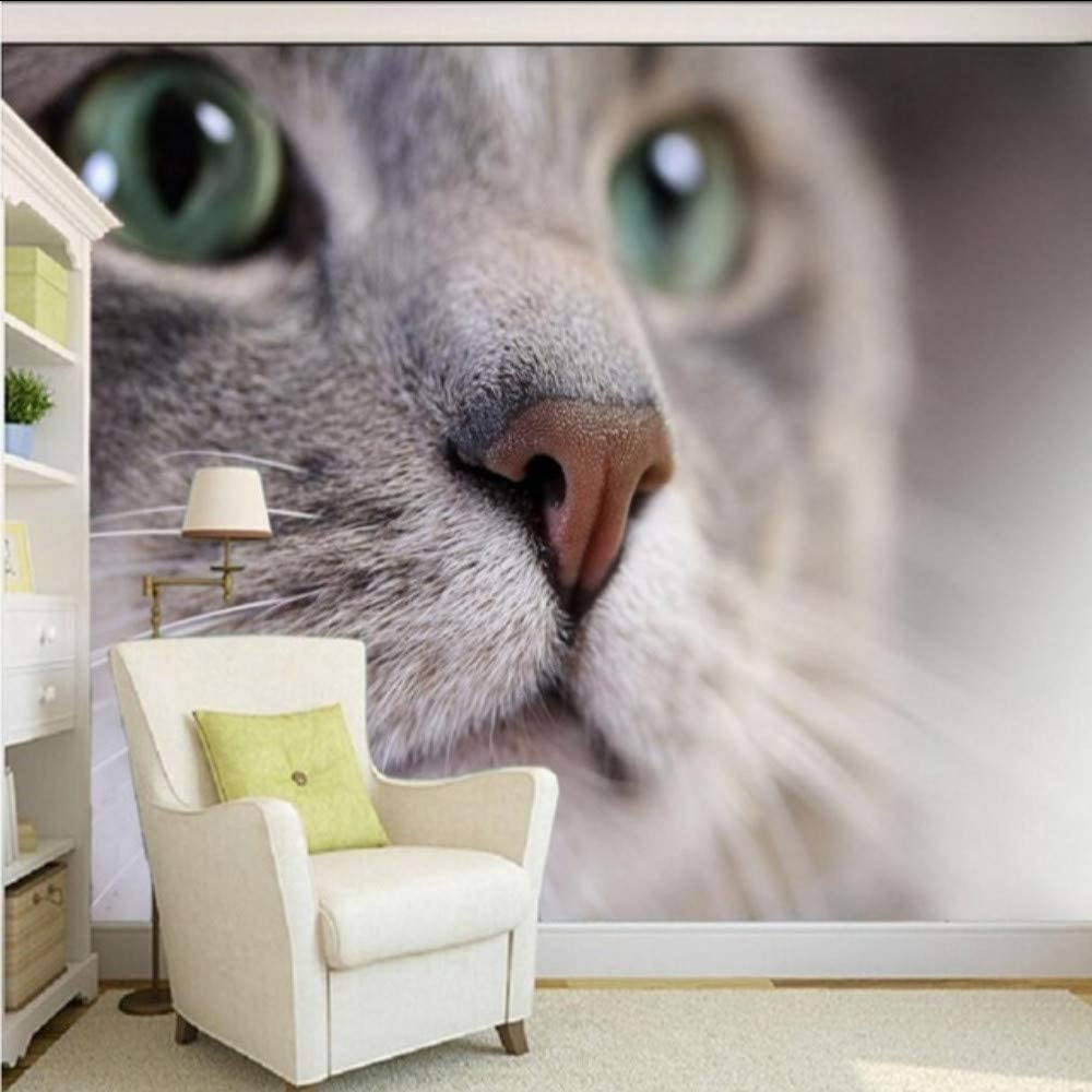 Amazon Com Xbwy Photo Wallpaper Hd Beautiful Cute Cat Photography Close Tv Background Wall Living Room Wallpaper Lobby Mural 200x140cm Furniture Decor