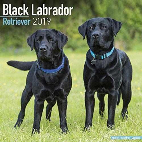 Black Labrador Retriever Calendar - Dog Breed Calendars - 2018 - 2019 Wall Calendars - 16 Month by Avonside (Labrador Retriever Stationery)