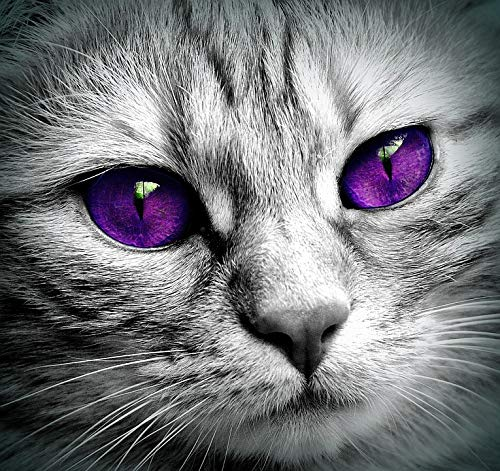 Home Comforts Canvas Print Eyes Close Cat Face Kitten Tiger Pet Face Cat Vivid Imagery Stretched Canvas 32 x 24