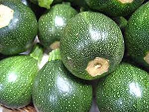 Zucchini Seeds, Round Squash, Heirloom, 100+ Seeds, Non GMO, Healthy Vegetable