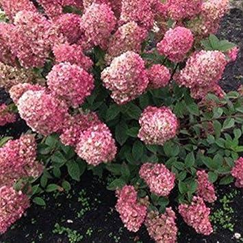 Gardener Babygrow in Burgundy landscape gardening floral NEW When I Grow Up .