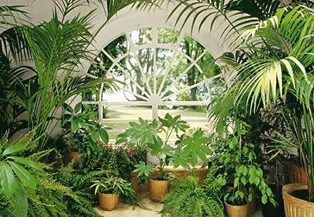 KISS Papel Pintado Fotográfico Jardín de Invierno, 366 x 254 cm, Ventana Blanca, Park, Jardín, Palmeras y Plantas: Amazon.es: Hogar