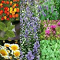 Bug Repellant Wildflower & Herb Seed Mix