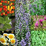 Bug Repellant Wildflower & Herb Seed Mix - 1 Lb