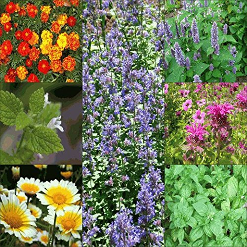 Bug Repellant Wildflower & Herb Seed Mix - 1 Ounce