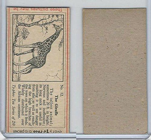 T0-0 Typhoo Tea, Wild Animals, 1955, 12 Giraffe