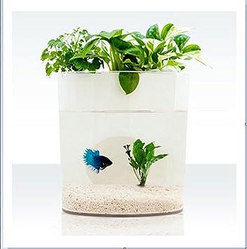 Purposefull acuaponía, acuario/cama creciente, tanque de peces y sistema de filtro de agua con planta, rectangular: Amazon.es: Productos para mascotas