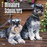 Miniature Schnauzers International Edition 2018 12 x 12 Inch Monthly Square Wall Calendar, Animals Small Dog Breeds