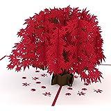 Lovepop Japanese Maple Pop Up Card, 3D Card, Tree Card, Nature Card, Foliage Card, Fall Card