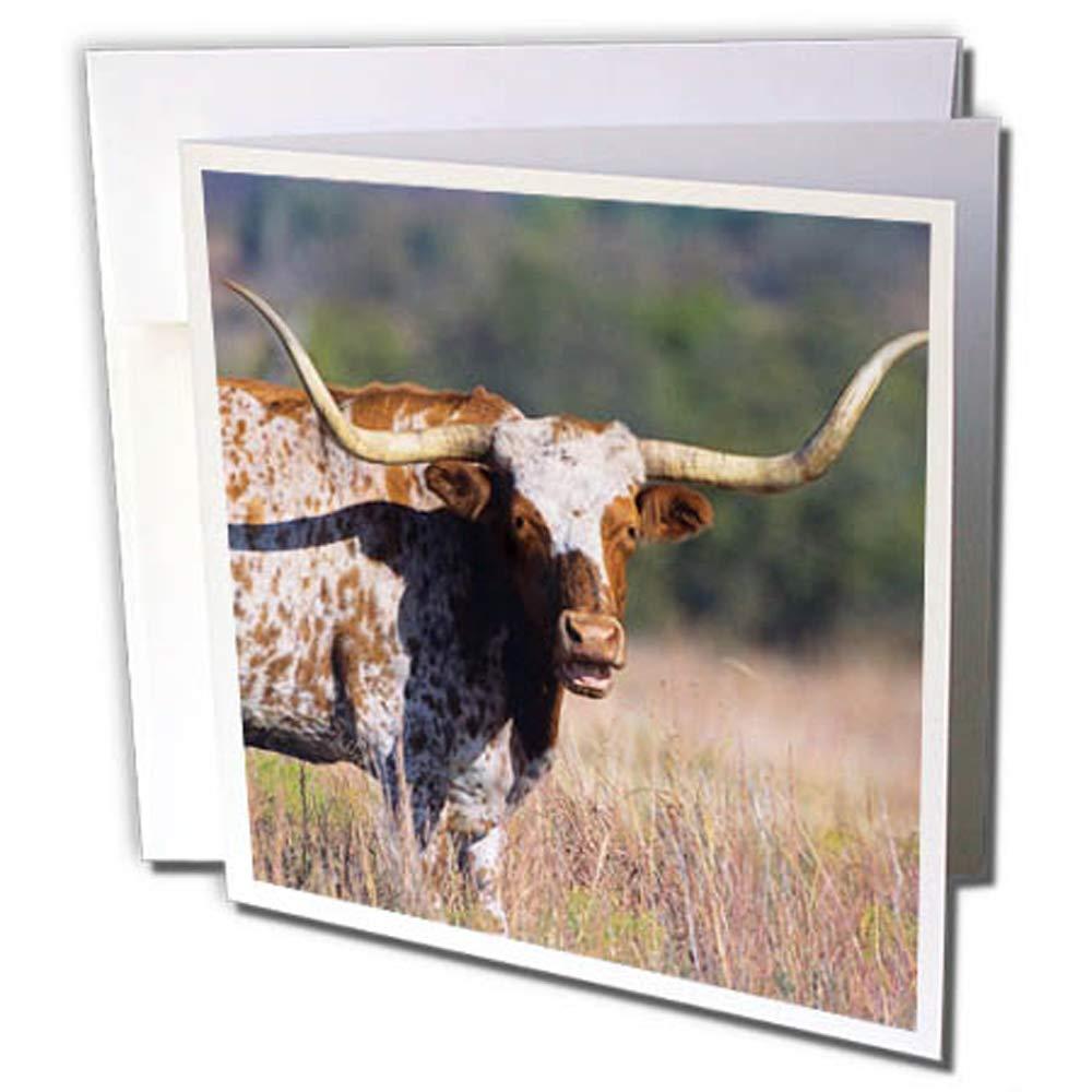 3dRosa 12 strapazierfähiges Karton Papier (GC 260687 _ 2) B079DGCTHG | Günstigen Preis