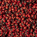 Double Order 3000 Live Ladybugs (2 packs of 1500) - Beneficial Insects - Fresh Premium Young Ladybugs - Delivered To You Alive Guaranteed - Natural Earth Friendly Green Pest Control 4 You