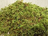 Appalachian Emporium's Live Moss Scraps for Transplant or Use Between Patio Stones Feather Sheet 1 Gallon Bag