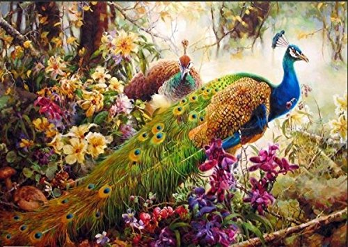 [, Wooden Framed or Not ] Diy Oil Painting by Numbers, Paint by Number Kits - Peacock 1620 inches Linen Canvas - PBN Kit for Adults Girls Kids White Christmas Decor Decorations Gifts