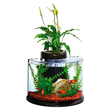 .com : elive aquaduo 3 gallon betta aquarium fish tank kit ...
