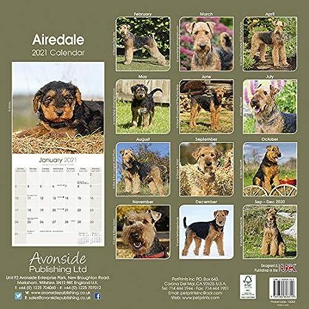 Calendrier Carte Cora 2021 Calendrier 2019 Airedale Terrier avec carte de Noël: Amazon.fr