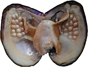 Oyster Pearls, POSHOPS Freshwater Cultured Big Oysters with Pearls Inside Pearl an Oysters Home Decoration Jewelry Making