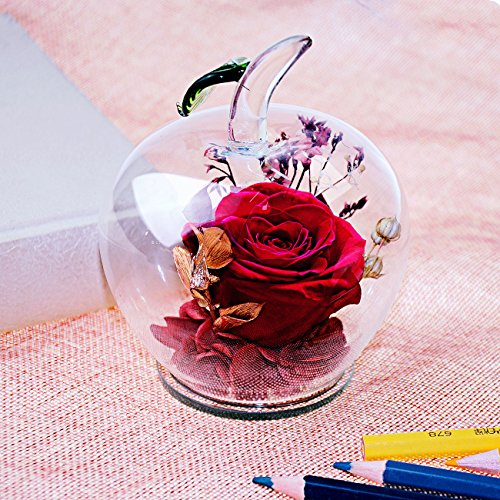 Ideashop Preserved Flower Rose Decor Never Withered Roses Upscale Immortal Flowers with Apple-shaped Glass Gift for Love Ones Valentine's Day Christmas Eve Anniversary Holiday Present Birthday (Glass Love Rose)