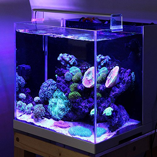 marine led licht korallen sps lps aquarium meer riffaquarium wei blau chihiros kurze stil bestellen. Black Bedroom Furniture Sets. Home Design Ideas