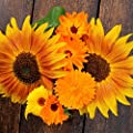 Sunflower Variety Mix 10 Types of Beautiful Sunflowers - 1/2 Ounce Open Pollinated Sunflower Seeds
