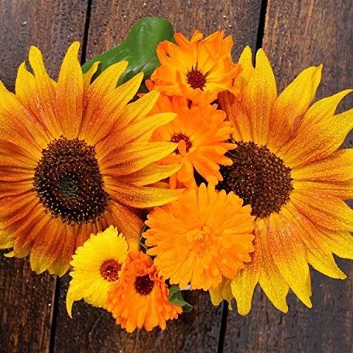 Sunflower Variety Mix 10 Types of Beautiful Sunflowers – Bulk 1 Ounce Packet – Open Pollinated Sunflower Seeds