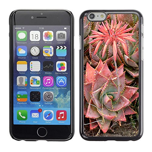 Caoutchouc Hard Case Shell Housse de protection Accessoire BY RAYDREAMMM - Apple iPhone 6 - Desert Blossoming Flower Plant
