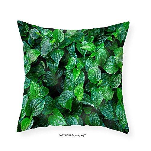 VROSELV Custom Cotton Linen Pillowcase Material. Thai Medicinal Plants.(Piper Sarmentosum Roxb.) - Fabric Home Decor 28''x28'' by VROSELV