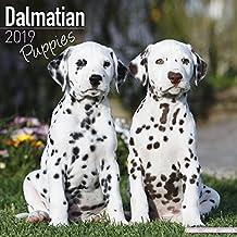 Dalmatian Puppies Calendar 2019