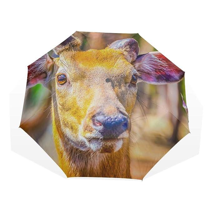 Paraguas de Viaje Ciervos Pintados a Mano Vestidos de Moda ...