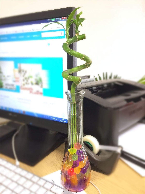 Espiral bambú de la Suerte