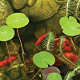 TotalPond UV Pond Clarifier