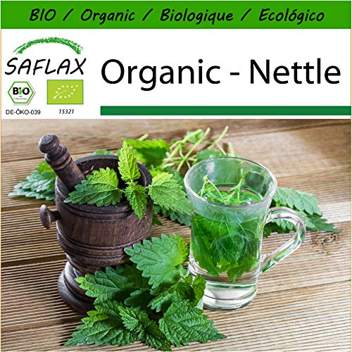 (SAFLAX - Organic - Nettle - 2000 Seeds - with Potting Substrate for Better Cultivation - Urtica dioica)