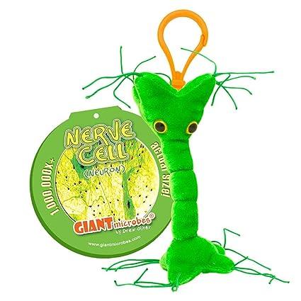 Amazon.com: GIANTMICROBES Llavero – Nerve cell (Neurona ...