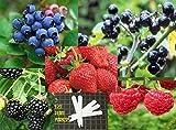 Fruit Combo Pack Raspberry, Blackberry, Blueberry, Strawberry, Huckleberry (Organic) 615+ Seeds 646263361511 Self Fertile + 5 Free Plant Marker